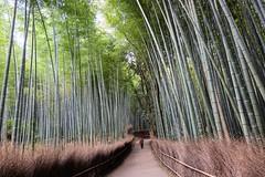 Arashiyama VII (Douguerreotype) Tags: green kyoto japan bamboo forest grove