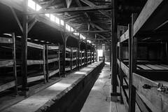 20130801Auswitch II Birkenau05 (J.A.B.1985) Tags: auswitch poland polonia iiww worldwar iigm guerramundial holocaust holocausto soah