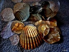El buscador de conchas (Franco DAlbao) Tags: francodalbao dalbao lumix composicin composition conchas shells anteojo spectacles mar sea binoculares fantasa fantasy playas beaches coleccin collection