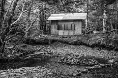 Cabin in the Woods (Wen879) Tags: bw canon24105mm canon70d dawsonbrook dry forest rocks trees ellershouse novascotia canada scared