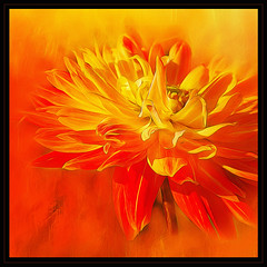 Sunny Sunday SS (BirgittaSjostedt) Tags: flower sun sunny txture art unique closeup yellow fire hot paint filter sliderssunday birgittasjostedt plant petal surreal texture serene photoborder bright ~themagicofcolours~xiii
