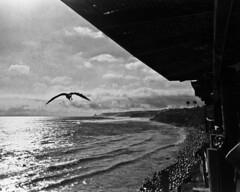 Film 2 (Ivan Contreras C.) Tags: film filme rollo fuji fujifilm iso 800 tijuana beach playa mexico animal bird seagull gaviota sea mar landscape paisaje black white blanco y negro