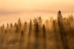 Sun rays, Koli National Park (Jenna Mrnen) Tags: sunrays lieksa koli sun morning finland suomi maisema canon