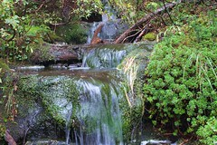 Dam Mountain (Frank Fujimoto) Tags: northvancouver bc canada water waterfall