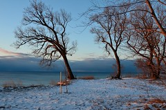First light, loved the sun's reflection on the snow and trees ~ Explored ~ (shireye) Tags: winter snow ontario cold sunrise nikon scarborough lakeontario cliffside scarboroughbluffs sunreflections d7000