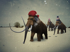 Woolly Hat Mammoth (Matt West) Tags: snow elephant hat mammoth prehistoric woollymammoth