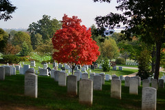 Arlington Cemetery (jzhill) Tags: red orange tree fall cemetery maple cool warm alone quiet foliage reserved
