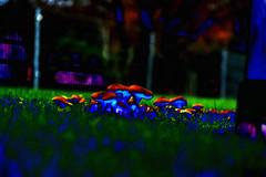 Mushrooms III (psychedelic world) Tags: art garden mushrooms lawn gras psychedelic pilze garten rasen wohltorf psychedelicworld