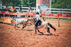 Rodeio Cabanha Quinheca. (Taís S. Bordignon) Tags: brazil horse brasil canon rs cavalo riograndedosul boi rodeio gado cachoeiradosul 60d tirodelaço cabanhaquinheca
