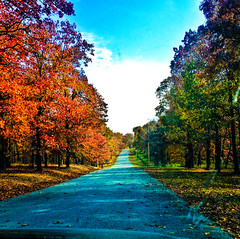 colorful trees in the fall (ConqueringBlindness) Tags: blind photographers blindphotographers