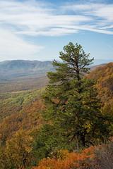 (bpark_42) Tags: autumn vacation mountains tree fall clouds landscape nikon blueridgeparkway d800