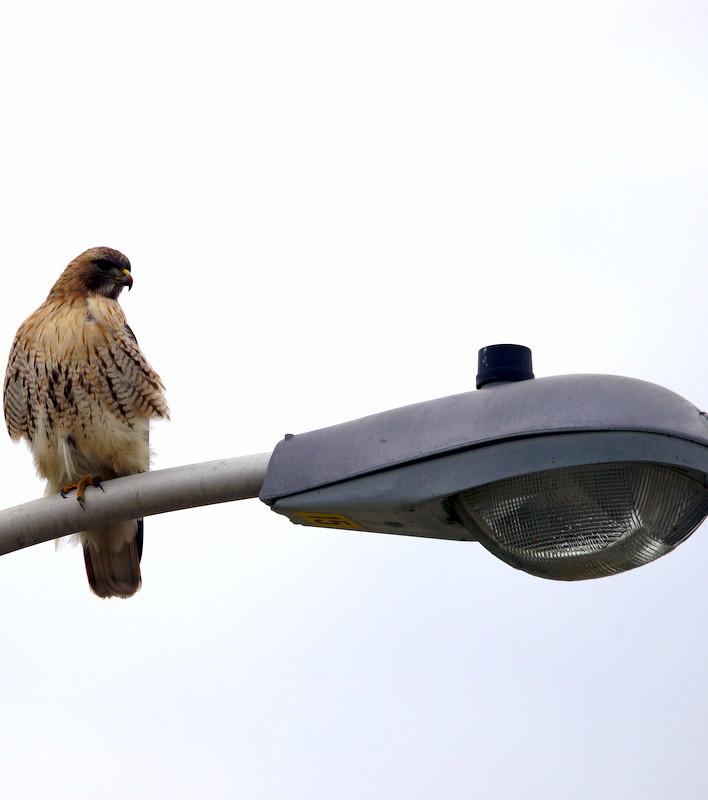 Loitering on a streetlight