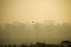 Solitary (ShamikBose) Tags: west bird forest river alone shamik solitary bengal bose gorumara 55250