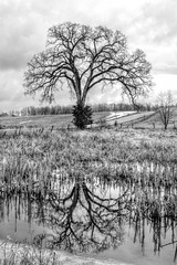 Tree of Life Revisited (B&W) (ftoomschb) Tags: life ny reflection tree nature water field sony valley hudson alpha dslr pleasantvalley luminance a700