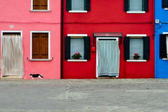 Burano Colors & Cat (Blende1.8) Tags: pink blue venice houses red house rot colors cat colorful colours rosa haus colored katze colourful blau coloured venedig farbig bunt burano buran farben fassaden