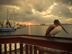 A pelican at sunset on the bay at Port Canaveral (Eric Atkins) Tags: sunset sea sky bird clouds sailboat bay fishing florida pelican perch iphone cocoabeach portcanaveral misslynn