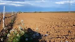 0046VIÑEDOS-plantar-injertos-(22-3-2013)-P1020051 (fotoisiegas) Tags: viticultura viñas viñedos cariñena plantar injertos fotoisiegas lospajeras