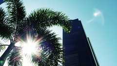 let the sunshine in (eFB) Tags: sunshine skyscraper miami district financialdistrict palmtree financial brickell