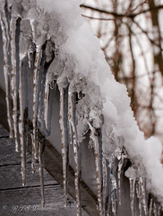 Icicles (Rick Smotherman) Tags: winter snow stpeters nature water clouds barn garden outdoors march morninglight backyard overcast 7d cloudysky canon7d canon100mmf28l