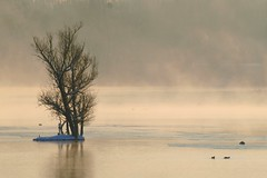 Solitude ** (Titole) Tags: mist lake snow tree island brume tang ilot friendlychallenges trvoix titole favescontestsweep favescontestsweepvssweep1st nicolefaton