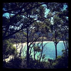 Crescent Bay (Hueystar) Tags: ocean blue sea sky tree beach water smart silhouette mobile square bay sand phone crescent tasmania 4s iphone instagram