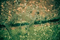 236/365: Splash! (Samutsim) Tags: water rain canon eos dallas texas crown dfw waterdrops watersplash highspeedphotography yabbadabbadoo project365 watercrown