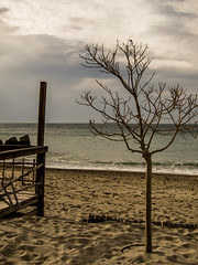 Waiting for... (gibel49) Tags: mare cielo albero spiaggia