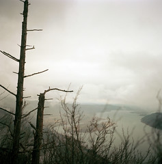 the bare, the withered tree (katez0r) Tags: tree film brooding columbiarivergorge angelsrest hasselblad500cm