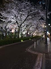 R0015245 (Hiro - KokoroPhoto) Tags: pink japan night cherry japanese kyoto blossom blossoms  bloom  cherryblossom  sakura cherryblossoms nippon cherrytree 6mm  kiyamachi   kyotocity  2013