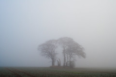 finding the right expression (still~positive) Tags: trees fog yorkshire 24mm soligor