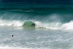Australie #Kangaroo Island #Dans les vagues (jf garbez) Tags: ocean voyage travel sea mer animal animals nikon wildlife wave australia nikkor 70300mm animaux vague southaustralia kangarooisland nationalgeographic australie otarie oceania faune ocan sealbay d600 australiansealion commonwealthofaustralia nikon70300mm nikkor70300mm ocanie nikond600 neophocacinerea australiemridionale nikonpassion updatecollection nikkor7003000mmf4556 commonwealthdaustralie liondemeraustralien lekangourou