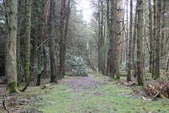 Carmichael path (IMG_9392)