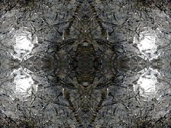 mud puddle 4 (bob the builder of luv) Tags: trees lightpainting abstract flower ice nature moss horseshoecrab invertabrate abstractphotography naturesabstract