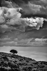 Graphic Storm (Ursa Davis) Tags: new sky bw usa white storm black west tree art nature weather clouds america photoshop landscape mexico photography photo desert artistic united scenic filter states davis ursa