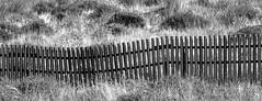 Happy Fence Friday (Ali -1963) Tags: fence contrasts mono blackwhite grass portugal alvor alisonroberts hff