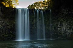Dangar Falls From Below (Paul Hollins) Tags: landscape landscapes waterfall australia newsouthwales dorrigo waterfallway nikond750
