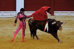 Cayetano en Alicante (Fotomondeo) Tags: cayetano matador torero toro toros plazadetoros corridadetoros bull bullfight bullfighter bullring alicante alacant espaa spain hoguerasdesanjuan fogueres
