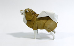 finnish lapphund (Friedman Origami) Tags: origami dog lapphund finnish paper art fold colorchange