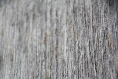 Weathered Barn Wood Texture knots SVREC August 2016 (4) (msuanrc) Tags: texture barnwood weatheredwood gray knots saginawvalleyresearchandextensioncenter
