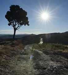 Tree & Sun (hbothmann) Tags: variosonnar163528za baumtree sonne sun toskana tuscany toscana cretesenesi