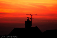As the dawn breaks (judethedude73) Tags: seagull bird sky skies colours morning light colour color silhouette contrast
