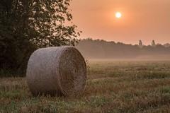 Am Ende des Sommers (webpinsel) Tags: halternamsee landschaft morgendämmerung münsterland natur nebel sommer sonnenaufgang morgens