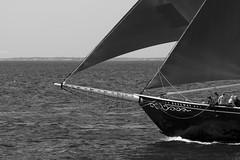 IMG_6073 - Sails (Syed HJ) Tags: canoneosrebelsl1 canonsl1 canon100d canon sl1 100d canonef100400mmf4556lisusm canonef100400mmf4556l canonef100400mm canon100400mmf4556l canon100400mm 100400mm atlanticocean atlantic ocean schoonersfestival schoonersfestivalgloucesterma schooners boats sailboats gloucesterma gloucester ma blackwhite blackandwhite bw