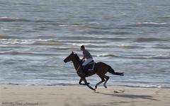 Belgian coast (Natali Antonovich) Tags: belgiancoast wenduine northsea sea seasideresort seashore seaboard seaside romanticism parallels nature water romantic horse horseman sport flight lifestyle relaxation