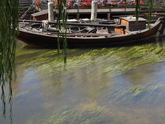 Lneburg (anders.l1) Tags: flus river boat weeping willow trauerweide green