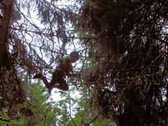 P8234084e (topzdk) Tags: treeclimbing summer 2016 czechrepublic ski slope lanovy park