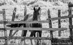 Duvido que voc acha onde eu estou! .Follow: @contrasteandoart . . (@contrasteandoart) Tags: instagramapp square squareformat iphoneography uploaded:by=instagram horse cavalo animal d3100 nikon nikkor nikond3100 lente 300mm contrasteandoart
