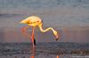 Molentargius 7 (Rawby) Tags: sardegna molentargius stagno uccelli