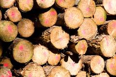 ckuchem-8287 (christine_kuchem) Tags: abholzung baum baumstmme bume einschlag fichten holzeinschlag holzwirtschaft wald waldwirtschaft