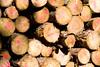 ckuchem-8287 (christine_kuchem) Tags: abholzung baum baumstämme bäume einschlag fichten holzeinschlag holzwirtschaft wald waldwirtschaft